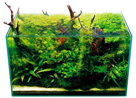 Green Machine Aquascape by Aquascape With Emergent Driftwood By The Green Machine