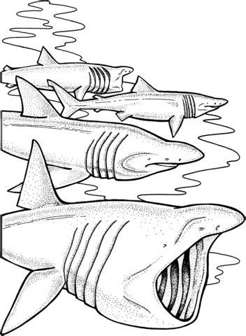 basking shark coloring page basking sharks coloring page supercoloring com
