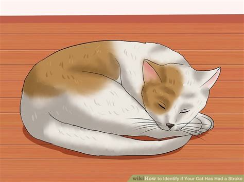signs your had a stroke how to identify if your cat has had a stroke with pictures