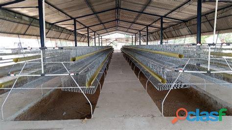 jaulas conejeras industriales jaulas gallinas ponedoras anuncios mayo clasf