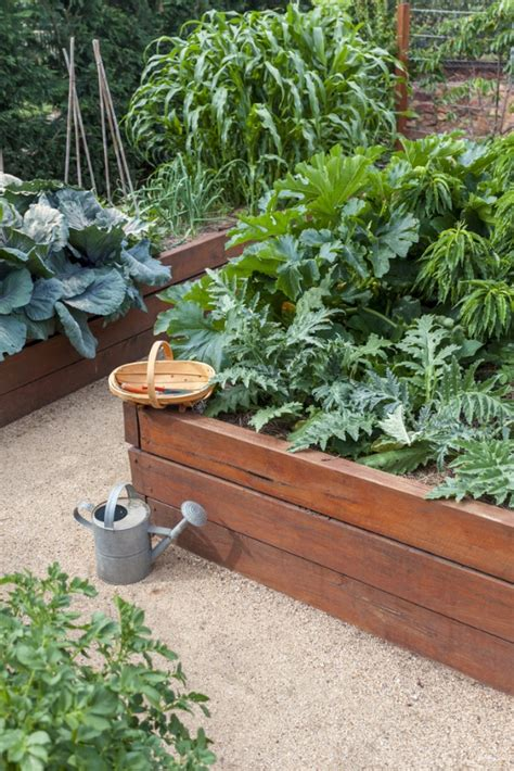 Best Vegetables To Grow In Raised Beds by 5 Reasons To Grow Vegetables In Raised Beds