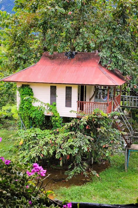 lakehouse bungalow tree house gt not available now khao sok smiley bungalows