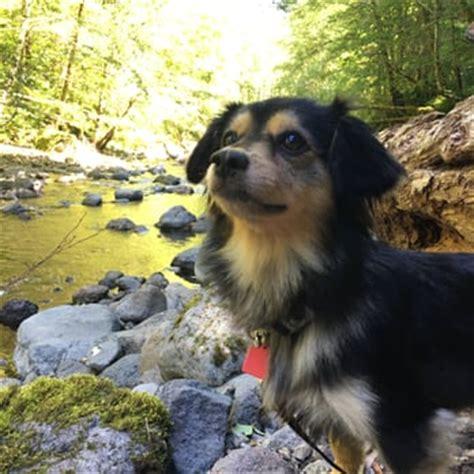 puppy rescue oregon oregon rescue 10 photos 23 reviews animal rescue shelters 6700 sw nyberg