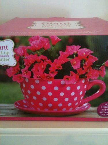 giant cup saucer planter ebay