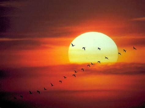 imagenes sobre web 3 0 imagenes y dibujos sobre el sol im 225 genes taringa
