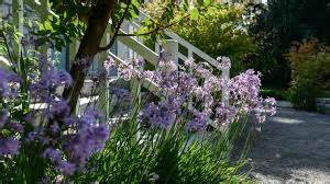 Yet Another Delight Jardin Dulysse by The Kitson Quot Giverny Talks Quot The Kitson Bonding
