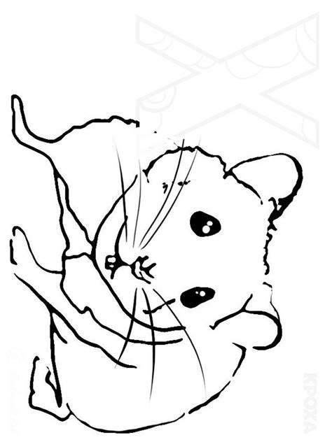 Hamster Coloring Pages Download And Print Hamster Hamster Coloring Page