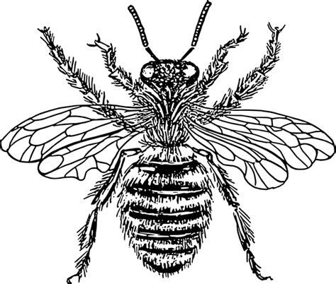 queen tattoo png bee 12 clip art at clker com vector clip art online