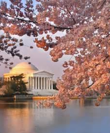 cherry blossom festival dc guide to the national cherry blossom festival washington org