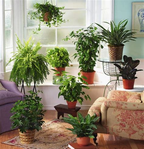 indoor plant decoration fern decor for room windows facing north and interiors