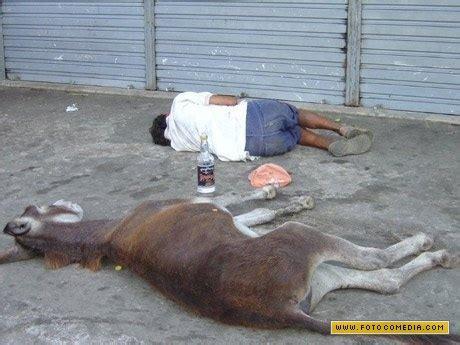 imagenes graciosas de borrachos dormidos imagenes de borrachos auto design tech