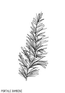 rosemary coloring pages    print portale bambini