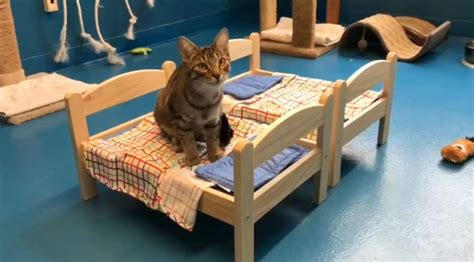 donate ikea furniture ikea have beeing donating cosy doll beds for cats at an