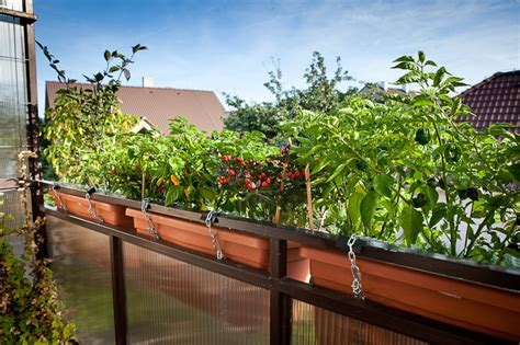 Chili Garden by Balcony Chili Garden Pech