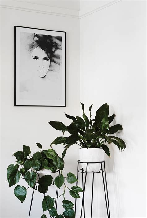 25 best ideas about house plants on pinterest plants best office plants ideas on pinterest indoor inside and
