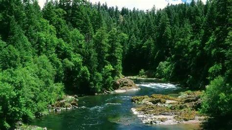 nature  river stream youtube