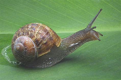 un caracol a snail caracol de mar sea snail car interior design