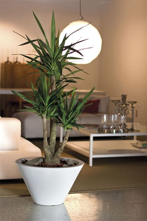 vasi decorativi per interni stunning vasi moderni da interno ideas