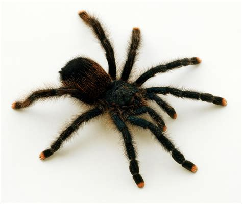 spider images the science of spider paws cosmos