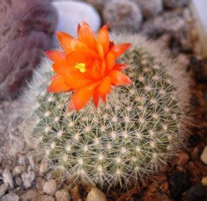 Pot Bunga Kaktus Pot Tanaman Hias 1 aneka tanaman hias kaktus mini tanaman hias tanaman hias