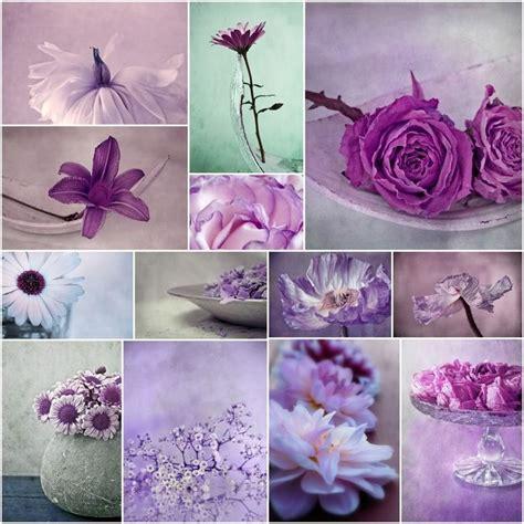 images  collages  pinterest purple