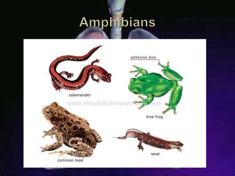Cutaneous Respiration In Frog Essay by Cutaneous Respiration In Frogs Images
