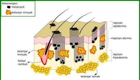 menghilangkan bekas jerawat  laser toning