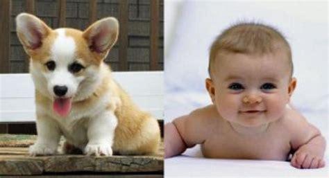 puppies vs babies puppies vs babies next episode air date countdown