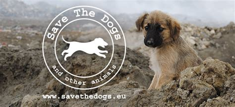 save the puppies save the dogs l associazione che salva ogni anno migliaia di animali team world