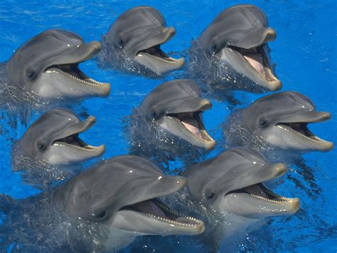 Free HQ Bottlenose Dolphins Wallpaper - Free HQ Wallpapers