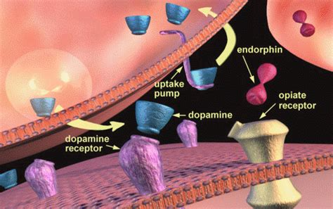 Does Heroin Detox Work by How Does Percocet Work