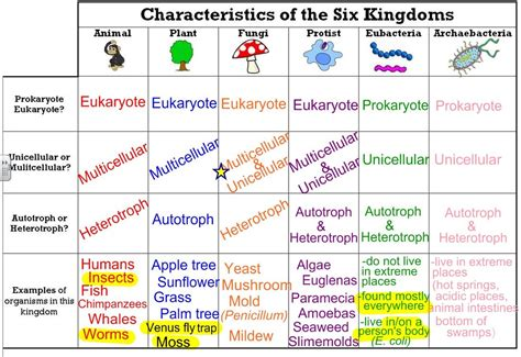 All About Lifestyle Review the six kingdoms thinglink school ap biology and school