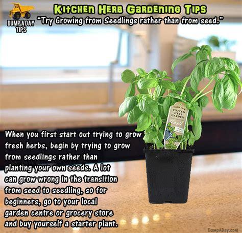 Kitchen Herb Garden Seeds Kitchen Herb Garden Tips Seedlings Not Seeds Dump A Day