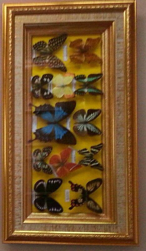 Kupu Vintage Dres kupu kupu bantimurung sulawesi butterfly from bantimurung sulawesi island indonesia creatives