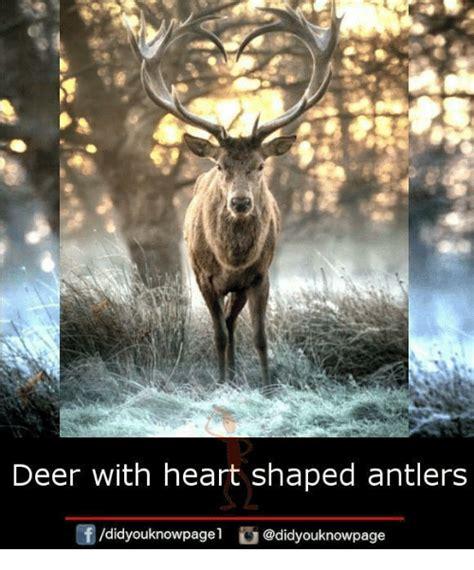 deer memes 25 best memes about deer deer memes