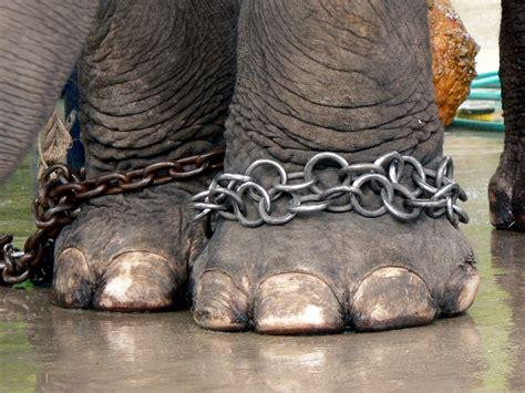 R Tunix Printing World bescherm olifanten op dierendag world animal protection nederland