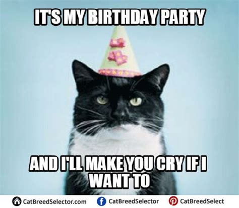 Cat Meme Birthday - happy birthday cat memes cat breed selector