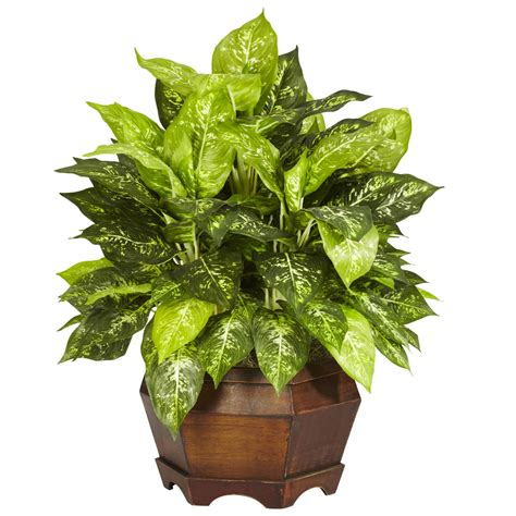 silk plants 24 inch variegated dieffenbachia in large hexagon planter