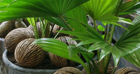 Plantes Interieur Sans Entretien