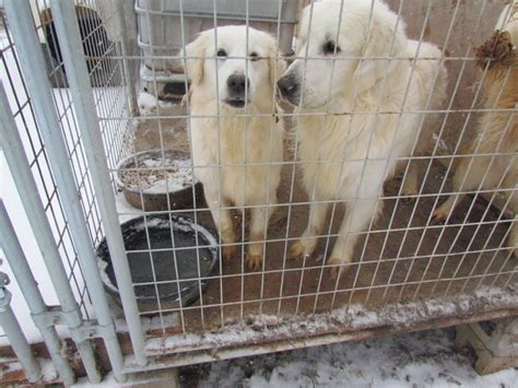 puppy mill dogs 18 rescued from kentucky puppy mill