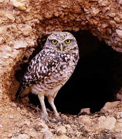 owl info owls 24 7
