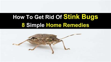 stink bugs in house winter house plan 2017