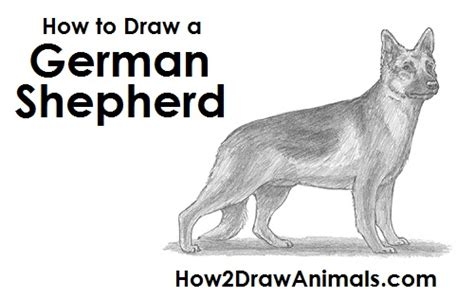 how to a german shepherd puppy how to draw a german shepherd puppy step by step www pixshark images galleries