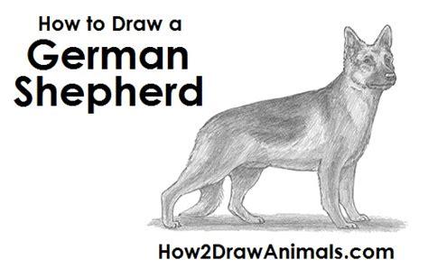 how to draw a german shepherd how to draw a german shepherd