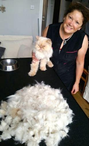 local groomers local cat groomer