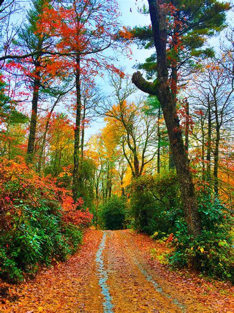 Ideal Image Asheville Carolina