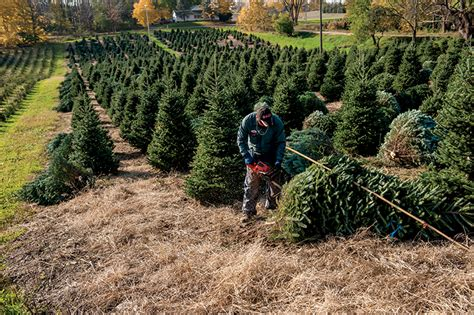 why you should buy a real michigan christmas tree farm