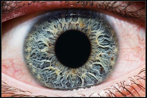 hd eye pattern hd close up of iris photograph iris by kenan kurtagic on