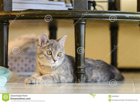 cat table cat sitting table stock photo image 53539502
