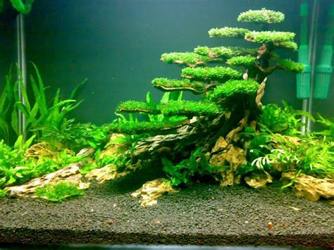 design aquascape planted tank moss tree aquascaping pinterest trees